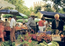 Weekly Market of Alcúdia